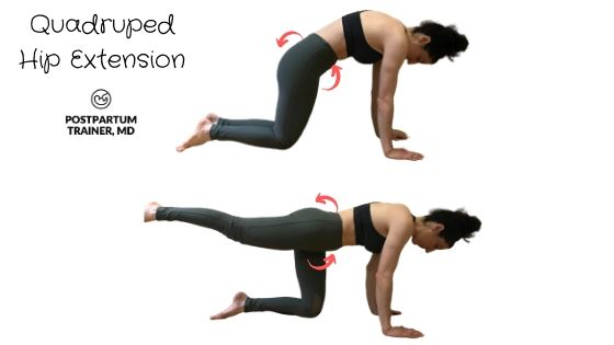 diastasis-recti-quadruped-hip-extension