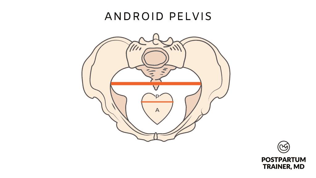 android-pelvis